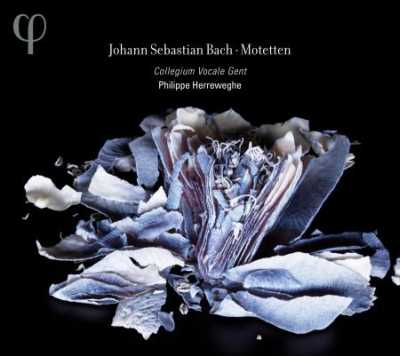 J.S. Bach / Motets (Complete) / Collegium Vocale Gent / Philippe Herreweghe