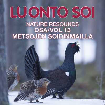 Luonto soi vol. 13 / Metsojen soidinmailla / Finnish Nature Resounds / In the Courtship Arena of the Western Capercaillie